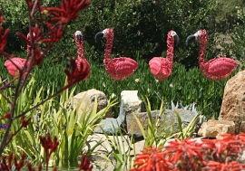 Flamingos_opt